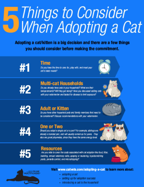 5 Things to Consider When Adopting a Cat