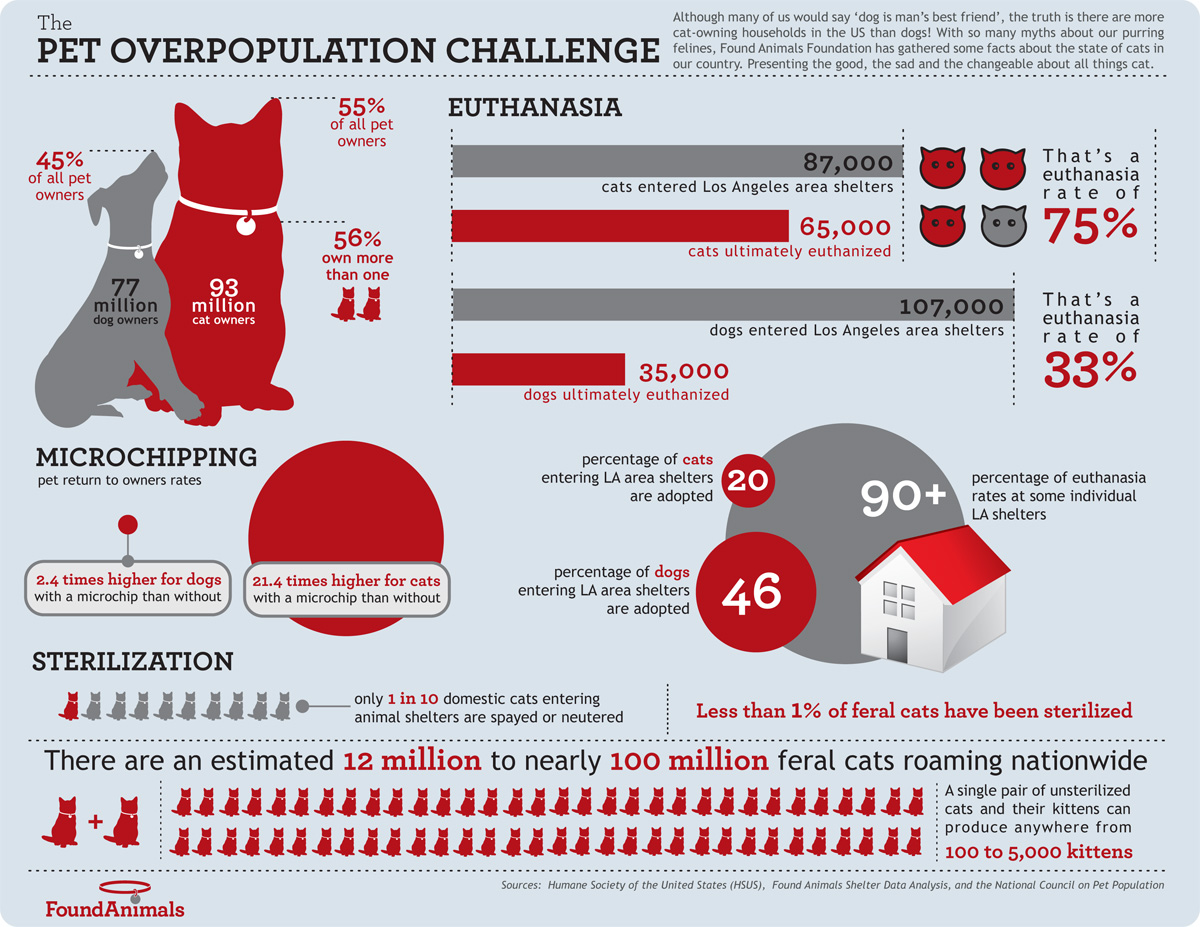 pet overpopulation challenge